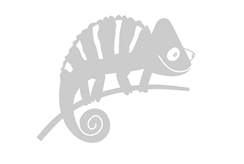 Flexible Kindergarten Chameleon